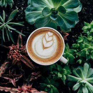 cropped-coffee-in-plants_4460x4460.jpg